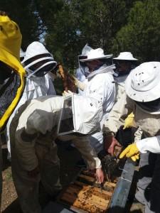 curso apicultura1